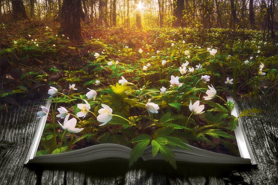 Nature dans un livre
